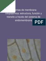 7. Sistema de membranas citoplasmicas