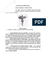 Structura anatomica a sfeclei de zahar-Fisa documentare