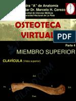 4- MIEMBRO SUPERIOR