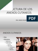 SEMANA 2 ESTRUCTURA DE LOS ANEXOS CUTANEOS(1)