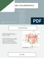 0901_Los colibries_Sistema Tegumentario[Corregida].pptx