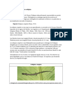 Salamandras del genero oedipina