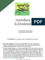 anabolismo.pdf