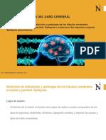 Síndrome de disfunción y patología de los lóbulos cerebrales Lóbulo occipital y lóbulo parietal