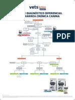 AFF ES Póster diagnostico diferencial diarrea crónica perros