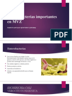 Enterobacterias importantes en MVZ