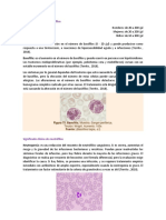 Significado clínico .pdf
