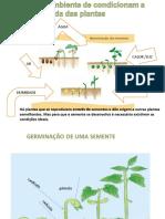 Plantas 3.ppt