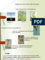 plantas3.pptx