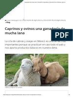 Caprinos y ovinos una ganadería de mucha lana _ Secretaría de Agricultura y Desarrollo Rural _ Gobierno _ gob.mx