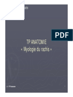 TP Anatomie myologie