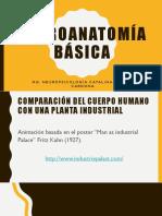 NEUROANATOMIA BÁSICA