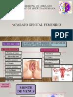 GENITAL FEMENINO.pptx