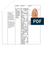 CUADRO MORFOFISIOLOGIA .docx