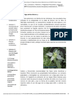 3.3 Ortiga (Urtica dioica)