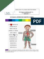 Sistema  circulatorio, un viaje