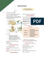HIPOFISIS-resumen