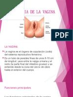 anatomia-de-la-vajina.pptx