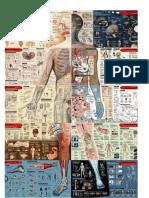 infografia completa del cuerpo humano