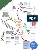 Mapa Conceptual del sistema endrocrino