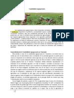 Contabilidad Agropecuaria en Venezuela
