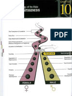 Endocrinology of the Male & Spermatogenesis.pdf