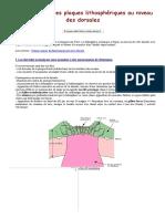 La divergence des plaques lithosphériques au niveau des dorsales