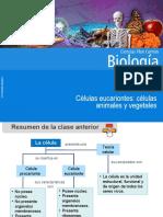 Clase 9 Células eucariontes animales y vegetales.ppt