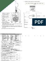 sistema digestivo primaria
