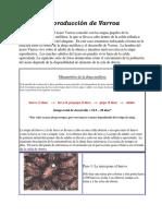 2010. Reproducción de la varroa.pdf