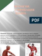 Миология.Классификация мышц.pptx