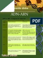 Diferente Dintre ADN Si ARN