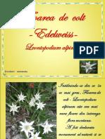 fdocumente.com_floarea-de-colt-edelweiss