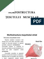 Structura tesutului muscular.ppt