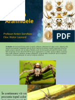 Prezentare Arachnida