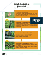 Butterfly Life Cycle Differentited Reading Comprehension.pdf