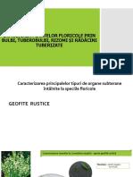 ÎNMULȚIREA-PLANTELOR-FLORICOLE-PRIN-BULBI-TUBEROBULBI-RIZOMI-ȘI-RĂDĂCINI-TUBERIZATE