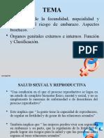 CLASE # 3 ÓRGANOS FEMENINOS Y MASCULINOS (1)