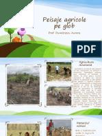 PEISAJE-AGRICOLE