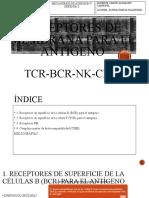 4 RECEPTORES DE MEMBRANA PARA EL ANTÍGENO