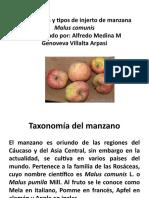 Propagacion y tipos de injerto de manzana