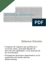 ppt-11_Sistema Urinario