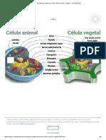 Semejanza y diferencia entre célula animal y vegetal - conócelas aquí.pdf
