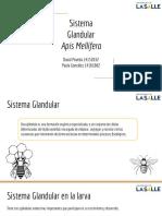 Exposición sistema glandular de la abeja .pdf