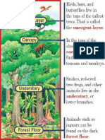 Rain forest layers.pdf