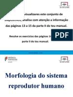 Constituição do sistema reprodutor_CN6º_1920