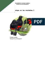 Informe 1 Seguimiento Caciques Candela