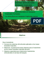 d.-Silvicultura tropical Prest. power point
