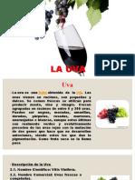 Exposicion de uva