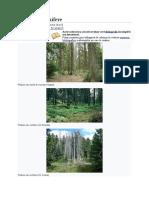 Pădure de conifere